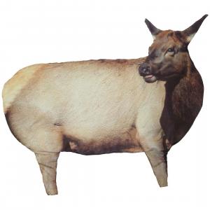 Montana Decoy Cow Elk I Decoy